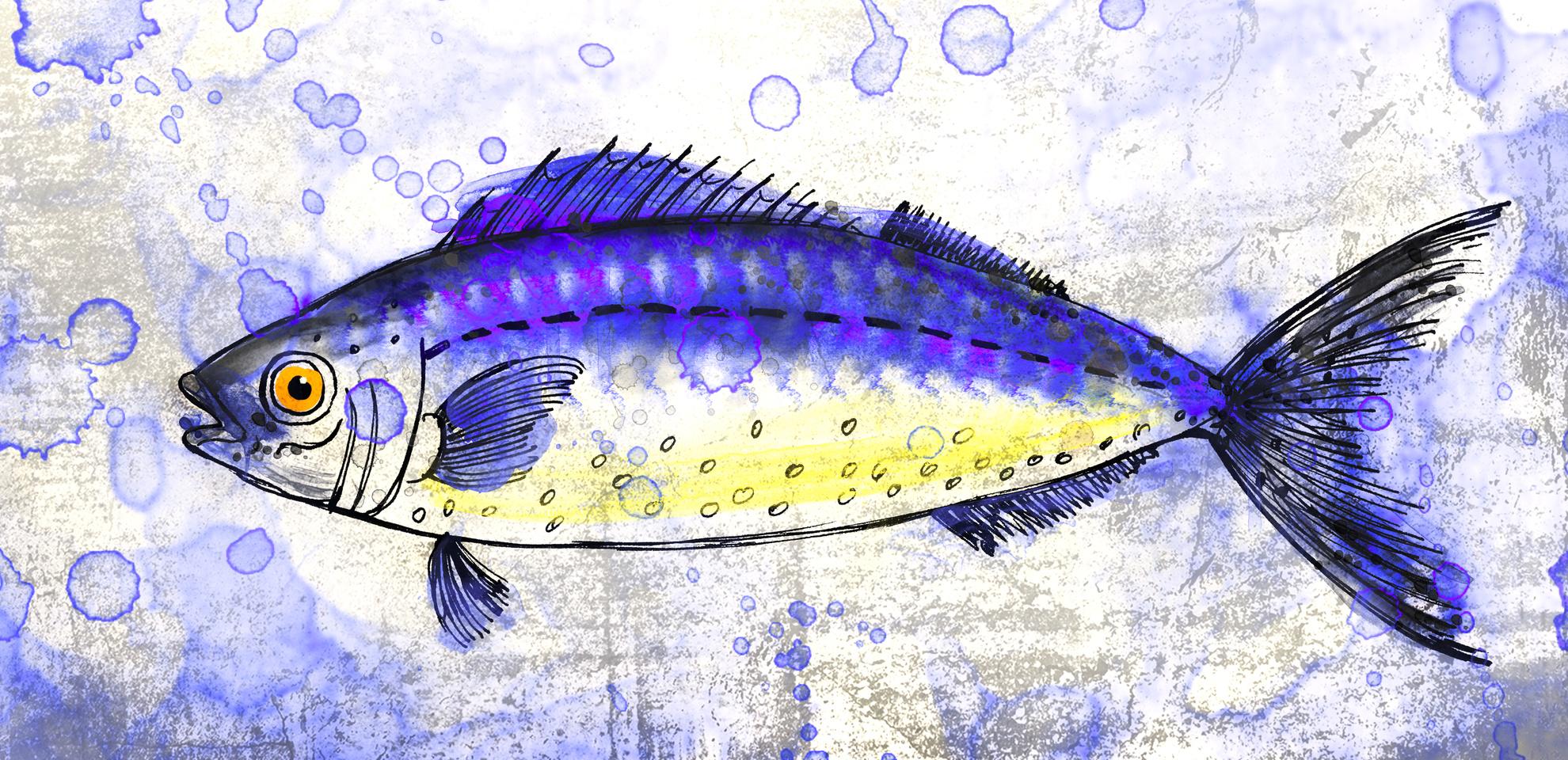 A pez dibujo 1