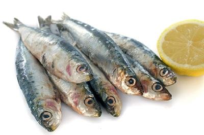 A sardina red