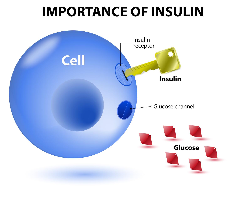 M insulina