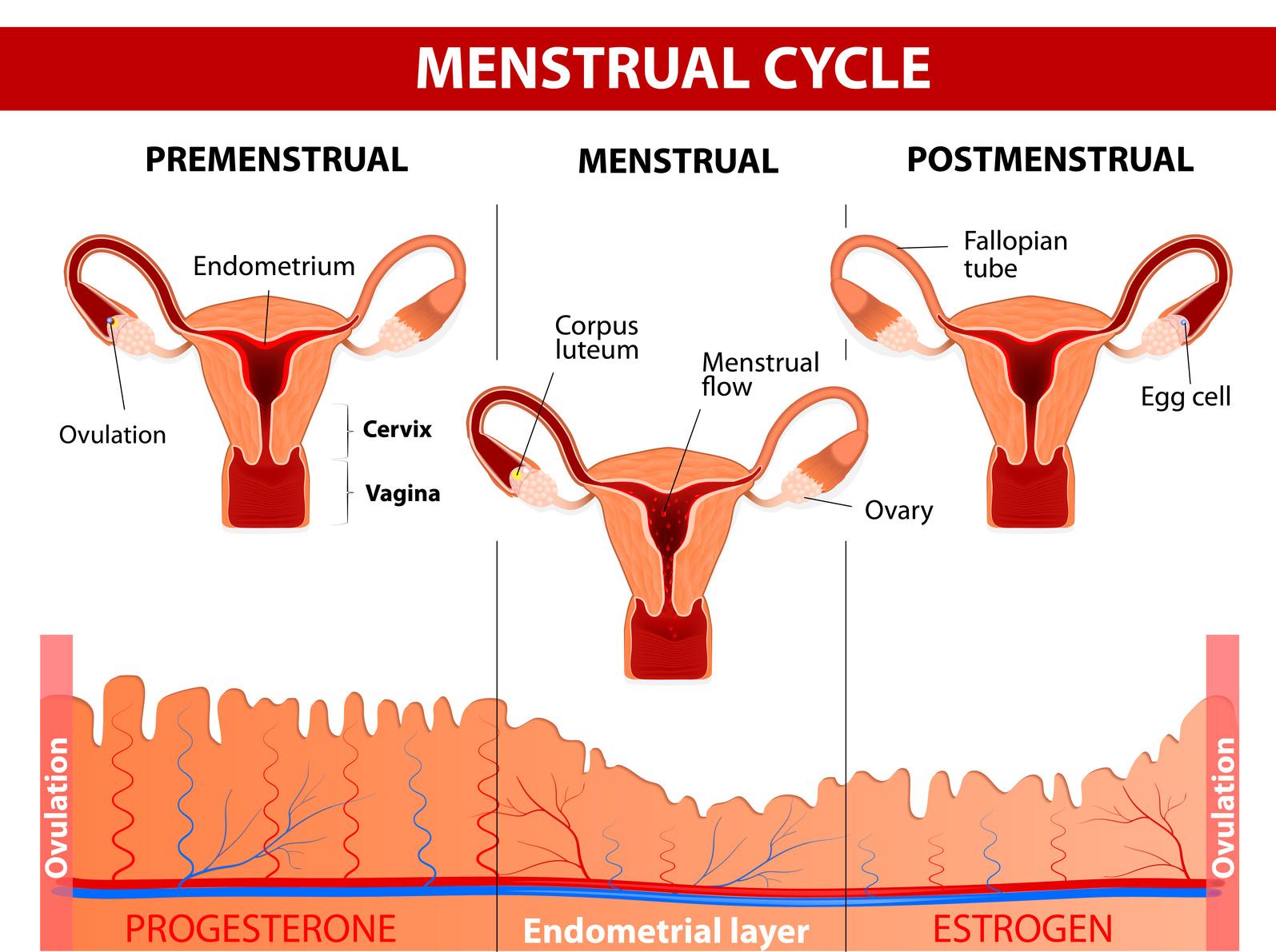 M menstruacion