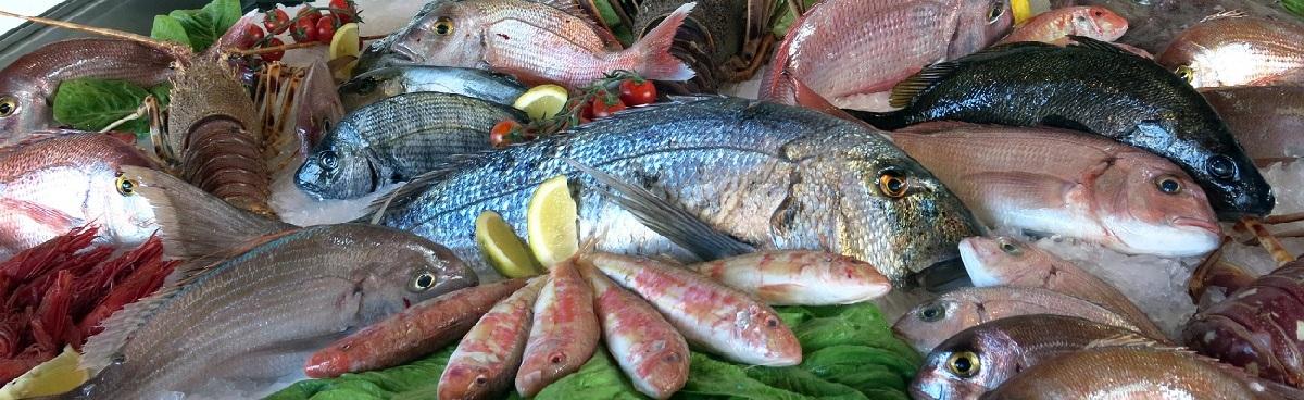 R pescado bodegon RED