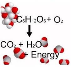 energia alim 1